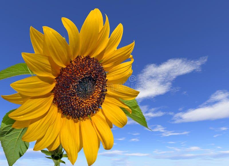 Pouvoir de fleur images libres de droits