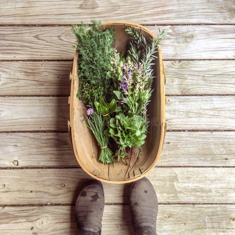 POV personale che esamina giù il canestro delle erbe fresche del giardino su Rus immagine stock libera da diritti