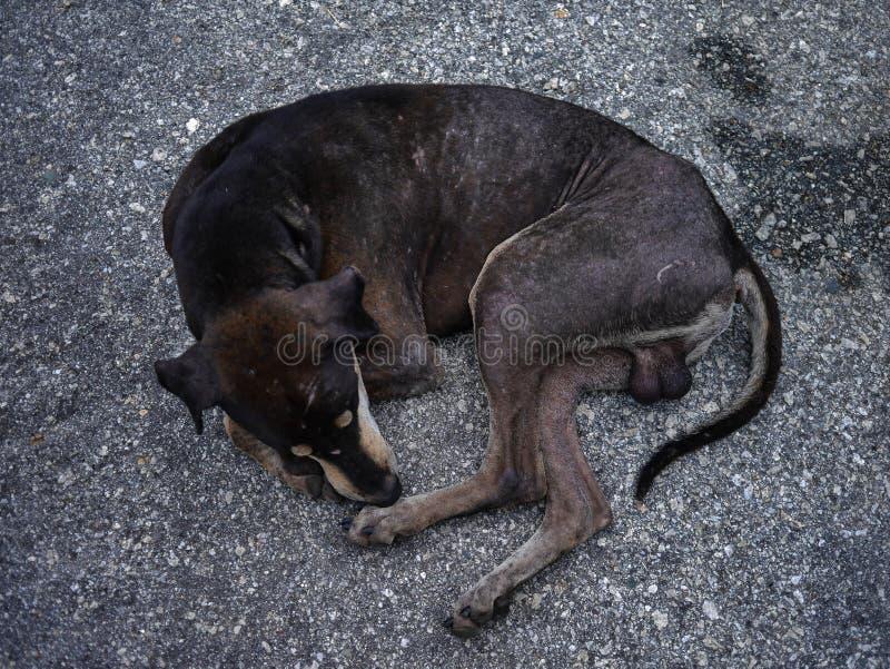 Povero cane fotografia stock