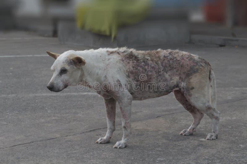 Povero cane rognoso immagini stock libere da diritti
