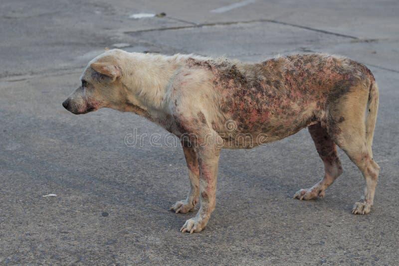Povero cane rognoso fotografia stock