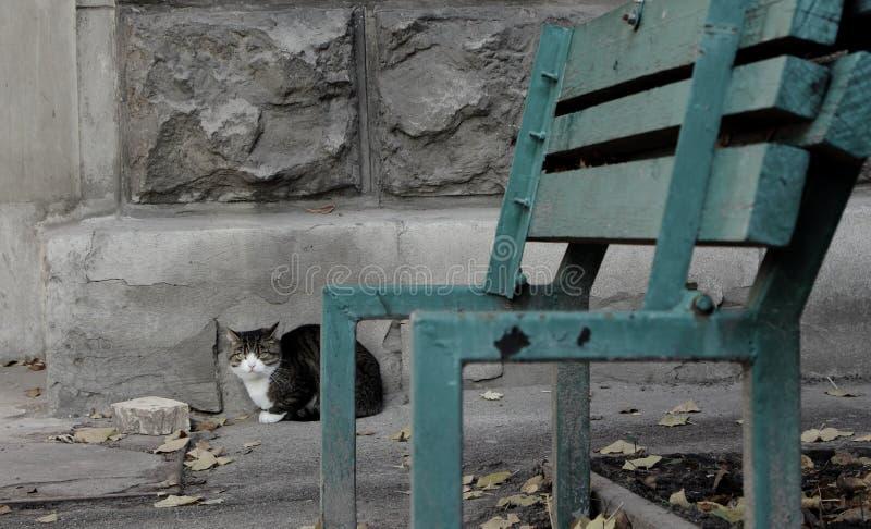 Povero gatto abbandonato contro il muro di cemento grigio con il banco rotto unfocused da priorità alta fotografie stock