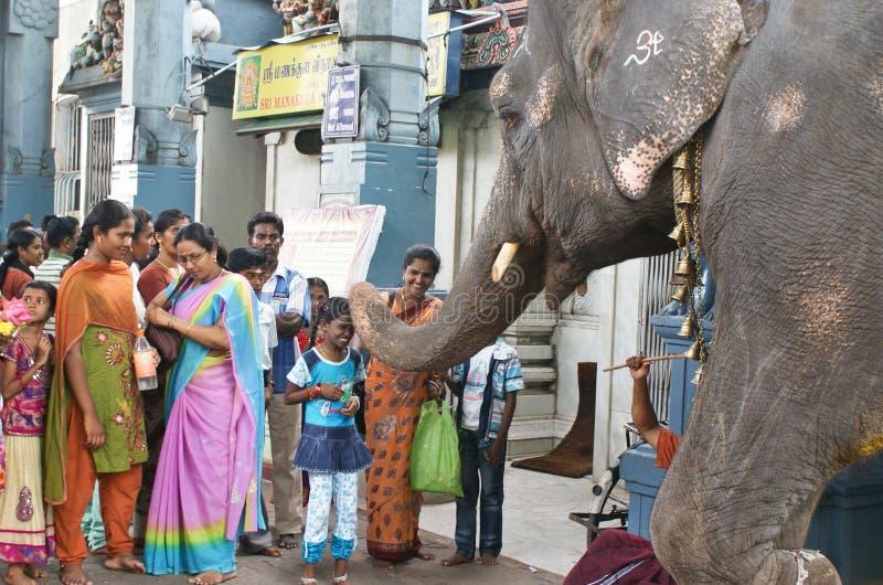 Povos da bênção do elefante na Índia foto de stock royalty free