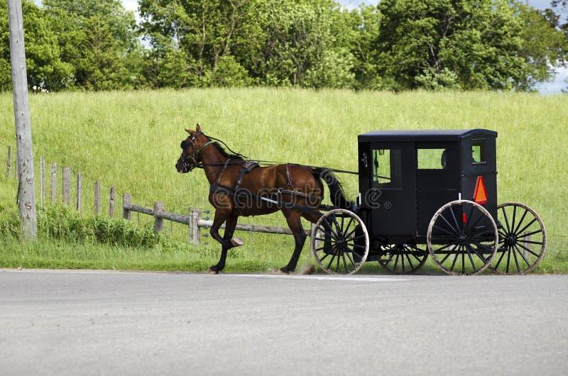 Povos de Amish (mennonite) que montam seu buggy fotos de stock