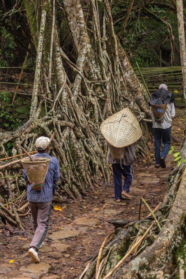 Povos de Khasi da ponte viva das raizes do cruzamento da vila de Riwai no estado de Meghalaya, Índia imagens de stock