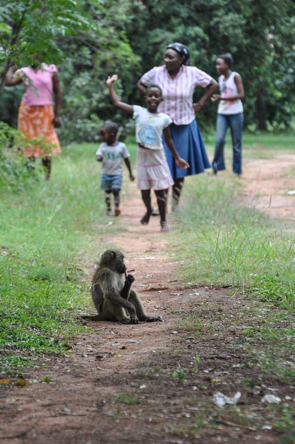 Povos e macaco, África foto de stock royalty free