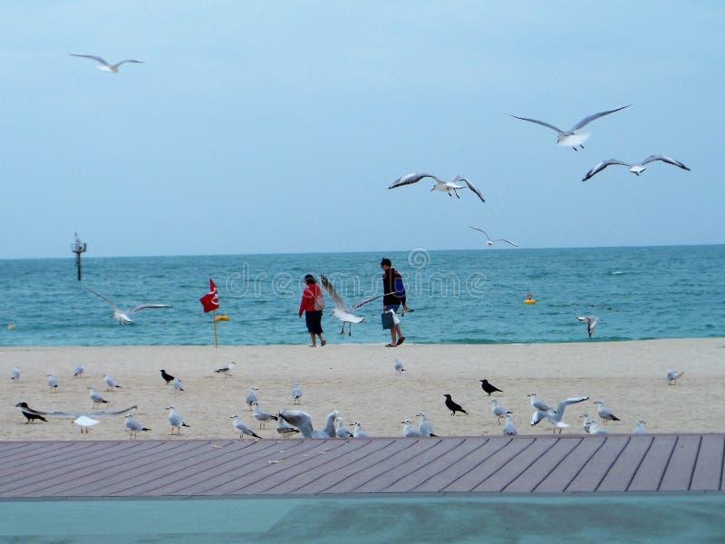 Povos e pássaros na praia fotos de stock
