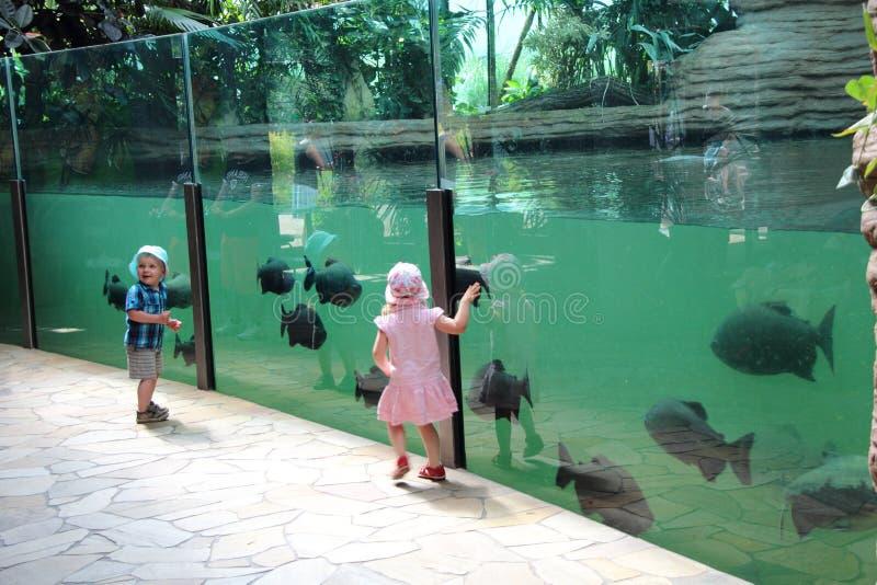 Povos no jardim zoológico imagens de stock royalty free