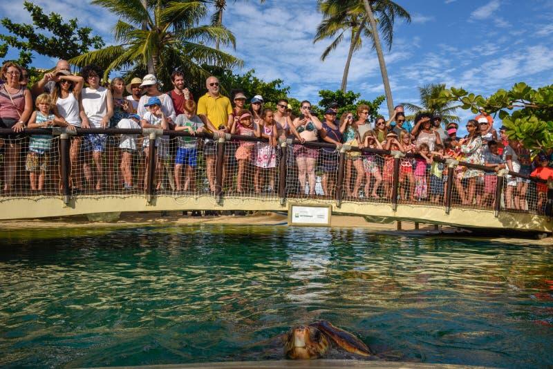 Povos observando tartarugas no tanque de Tamar do projeto no Praia para fazer o forte em Brasil imagens de stock royalty free
