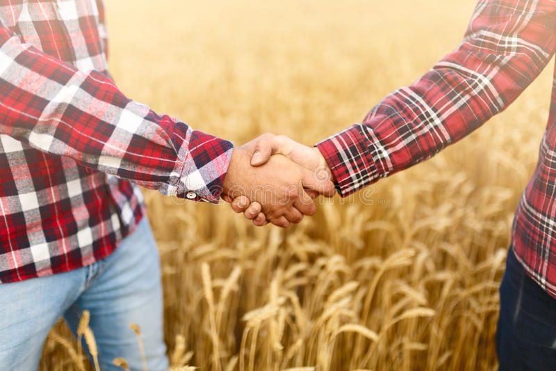 Povos que agitam as mãos em um campo de trigo, acordo do ` s do fazendeiro Conceito do contrato do negócio do agrônomo da agricul imagens de stock