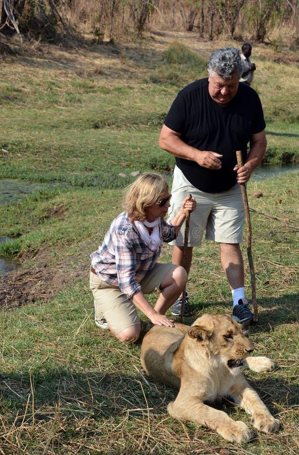 Povos que andam com leões fotografia de stock