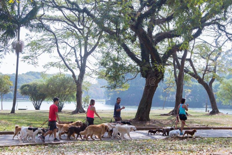 Povos que andam com os cães no parque imagens de stock royalty free