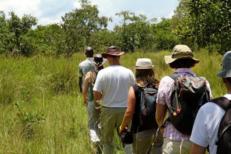 Povos que andam em uma linha através da floresta no safari foto de stock