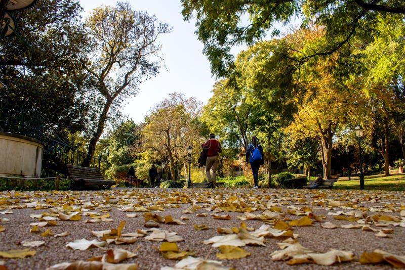 Povos que dão uma volta em Jardim a Dinamarca Estrela com folhas caídas ao longo do caminho, em um dia ensolarado imagem de stock royalty free
