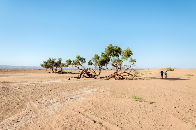 Povos que descansam na sombra, vale de Draa (Marrocos) fotografia de stock