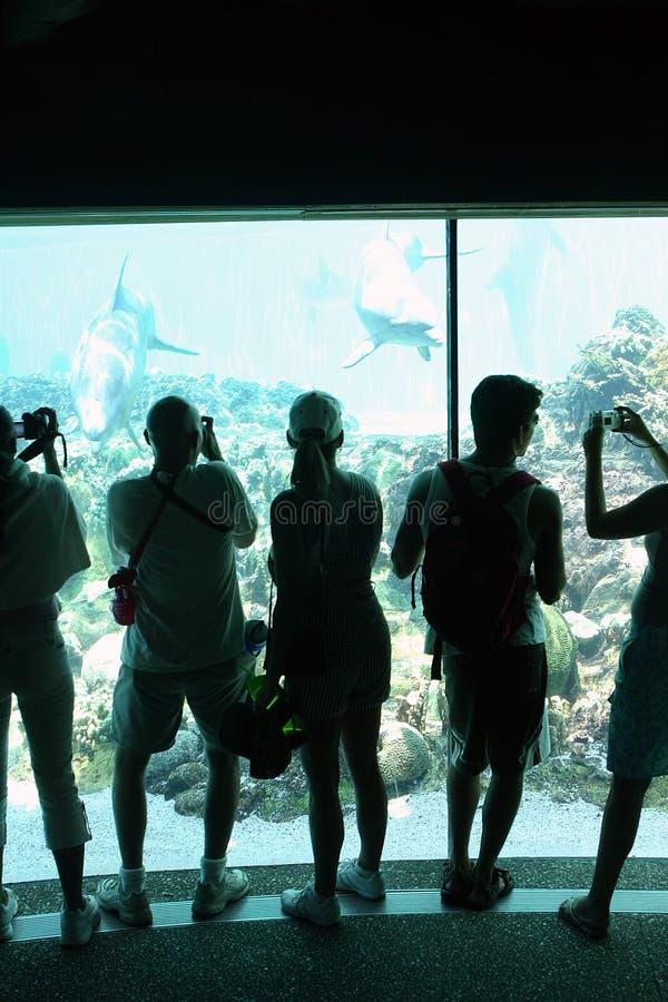 Povos que fotografam golfinhos em uma área subaquática da visão foto de stock royalty free