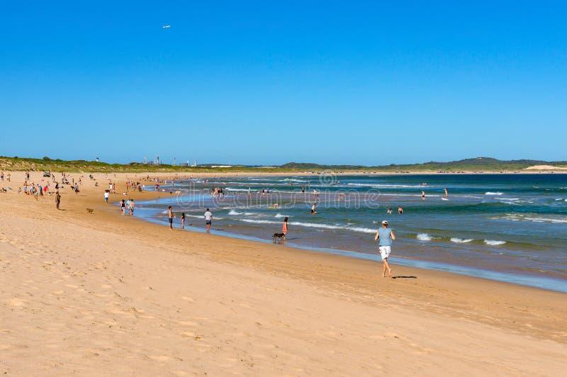 Povos que movimentam e que apreciam o feriado da praia no amigo do animal de estimação de Cronulla imagem de stock royalty free