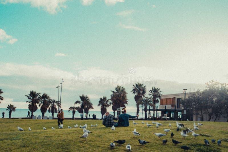 Povos que sentam-se na grama no parque completamente dos pássaros imagens de stock royalty free