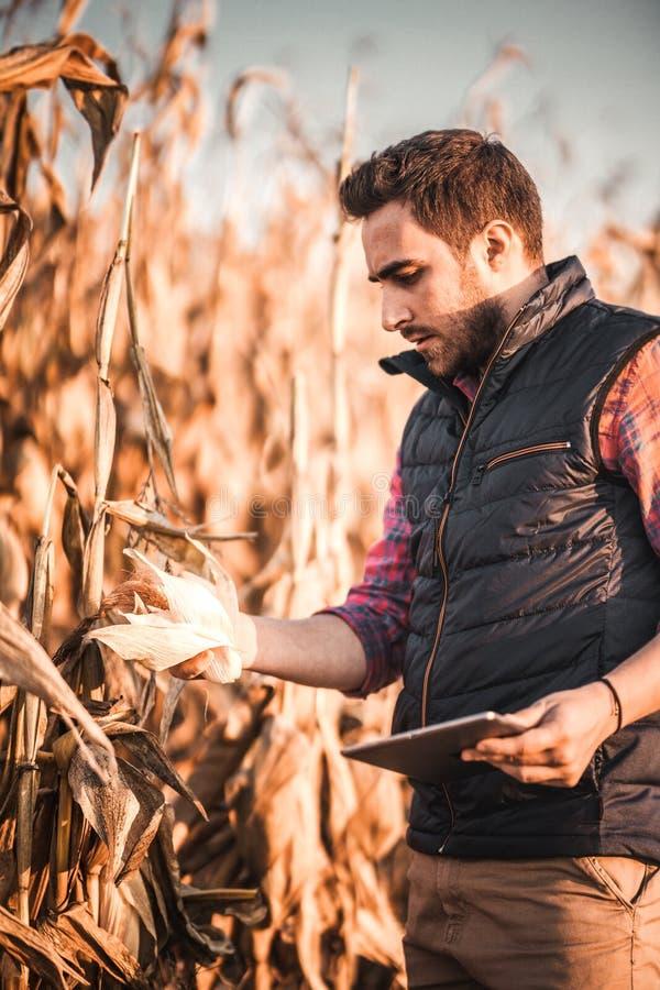 Povos - retrato do agrônomo do homem que usa a tabuleta na colheita da agricultura foto de stock royalty free