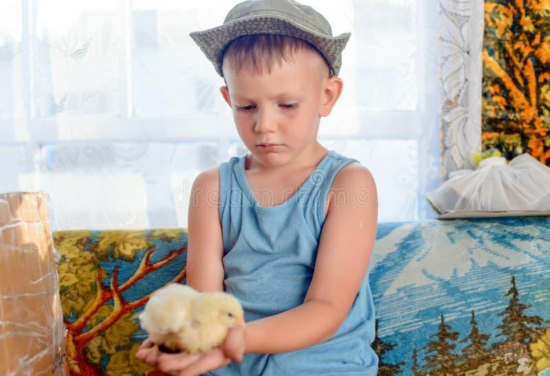 Poważna Śliczna Młoda chłopiec Trzyma jego Pisklęcego zwierzęcia domowego obrazy royalty free