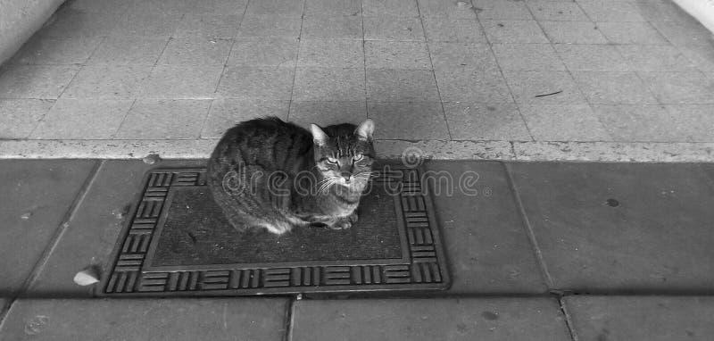 Poważny dziki kot obraz stock