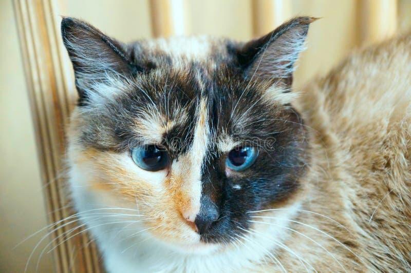 Poważny kot zdjęcia royalty free
