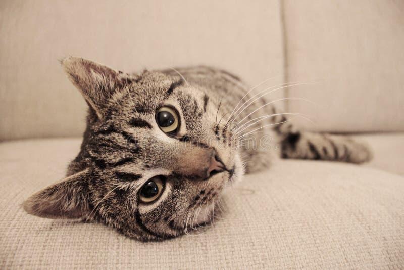 Poważny kot kłaść na leżance zdjęcie royalty free