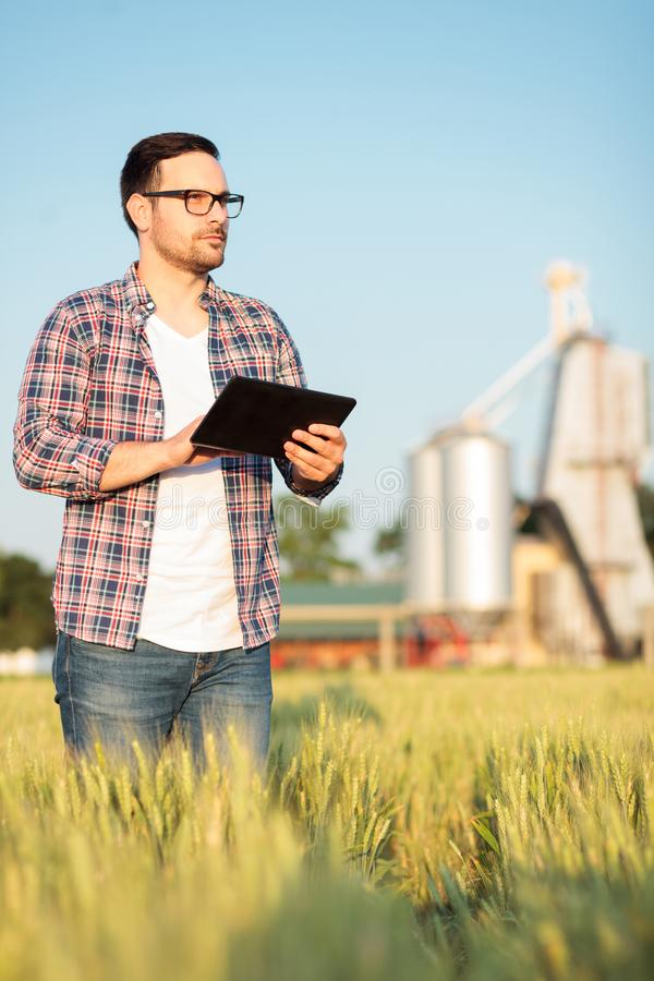 Poważny młody rolnik lub agronom sprawdza banatek rośliny w polu, pracuje na pastylce fotografia royalty free