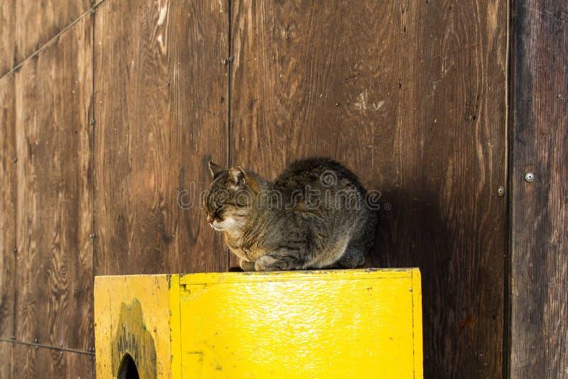 Download Poważny kot obraz stock. Obraz złożonej z owłosiony - 106905895