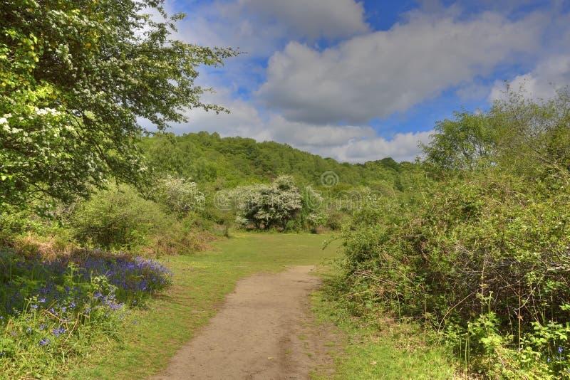 Powabna las ścieżka Południowy Zachodni Anglia zdjęcia royalty free