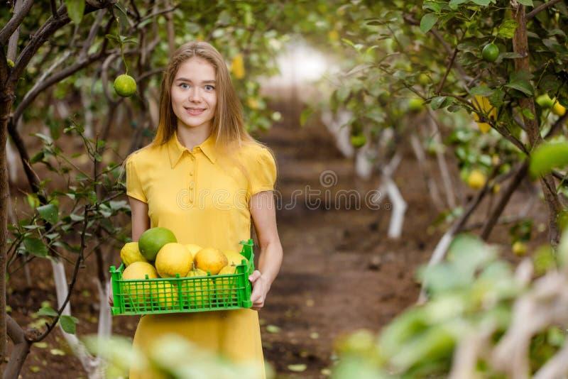 Powabne wspaniałe dziewczyny zrywania cytryny od szklarni fotografia stock