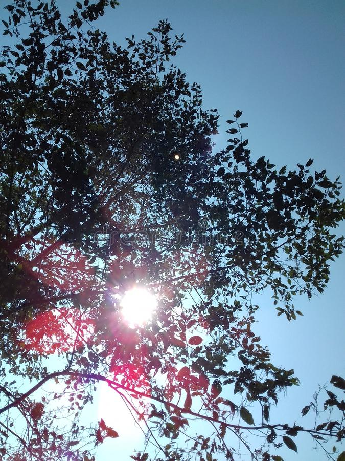 Powabni promienie słońce fotografia royalty free