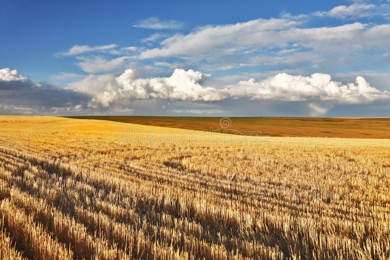 powabny krajobrazowy pastoralny zdjęcia royalty free