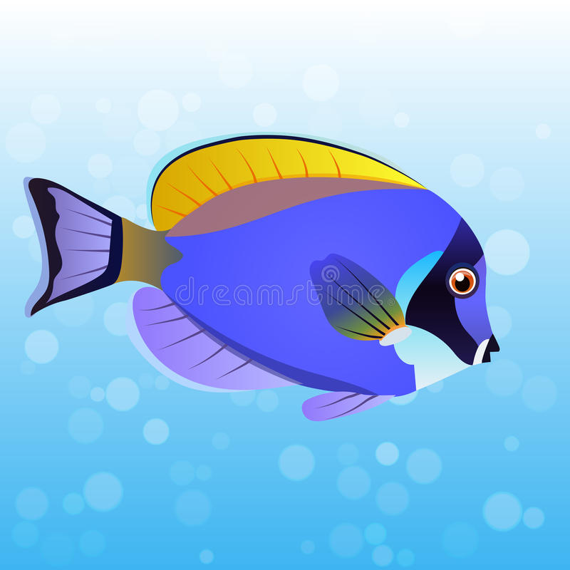 Powder Blue Tang fish. Very high quality original trendy vector illustration Powder Blue Tang fish, Acanthurus leucosternon stock illustration