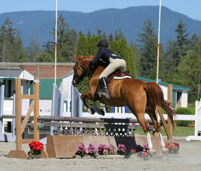 Download Power stock photo. Image of stable, saddle, stirrups, mare - 19344
