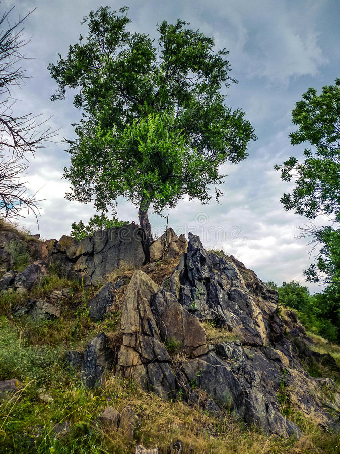 The power of life. Tree in granite rock royalty free stock photo