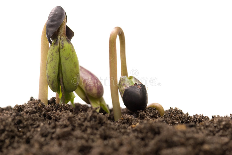 Download The power of nature stock photo. Image of care, growing - 6651826