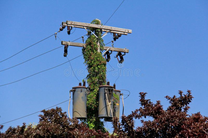 Power Pole. Image of a power line pole sticking of of the trees stock photos