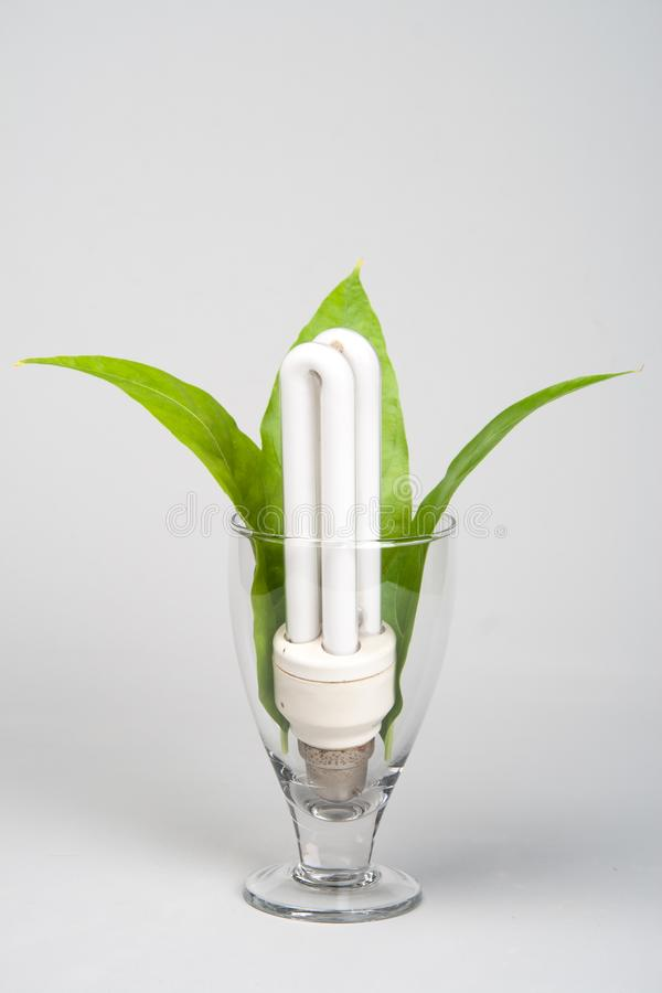 Power Saving CFL bulb Green Energy. Power Saving CFL bulb depicting Green Energy and Power Saving royalty free stock photo