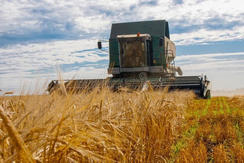 Harvester work in the field to harvest wheat stock images