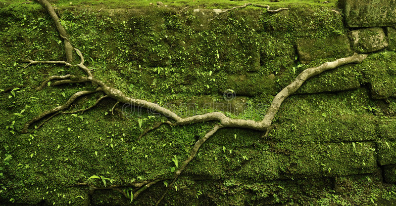 Download Powerful root stock image. Image of wood, wall, rural - 5392727