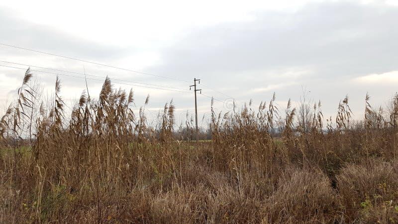 Powerline za wysoką wysuszoną trawą fotografia stock