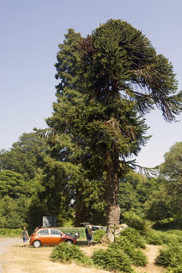 Powerscourt siklawa blisko Enniskerry, obraz royalty free