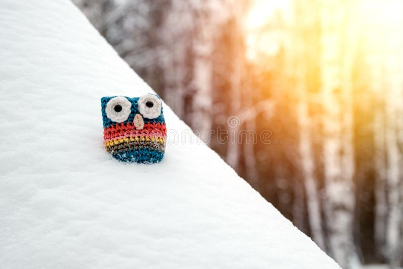 Powiązana kolorowa sowa w śniegu w lesie, światło słoneczne w kącie rama zdjęcie royalty free