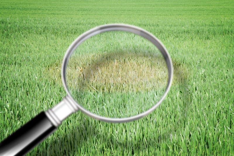 Powiększać - szkło z zielonej trawy tłem - trawy choroby pojęcia wizerunek zdjęcia stock