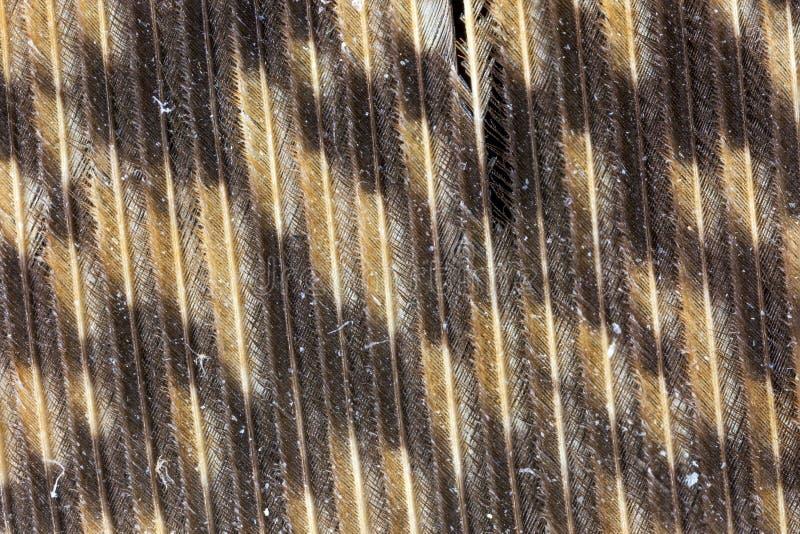 Powiększający widok Wielki Rogaty sowy piórko zdjęcia stock