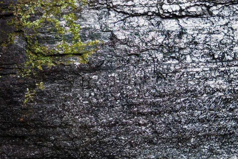 Powierzchnia czarny węgiel z mech obraz stock
