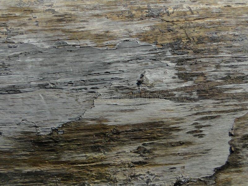Powierzchnia słońca wysuszony driftwood zdjęcia stock