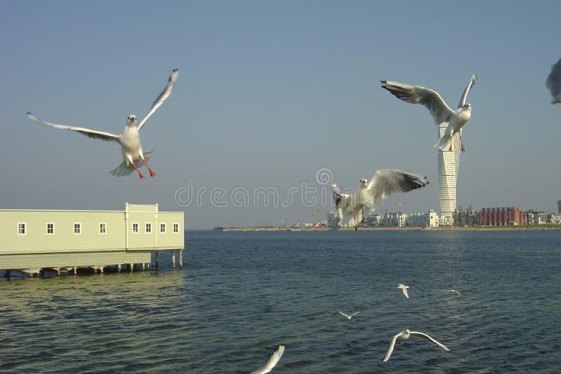 powietrze przez mewy regionu morza czarnego fotografia stock