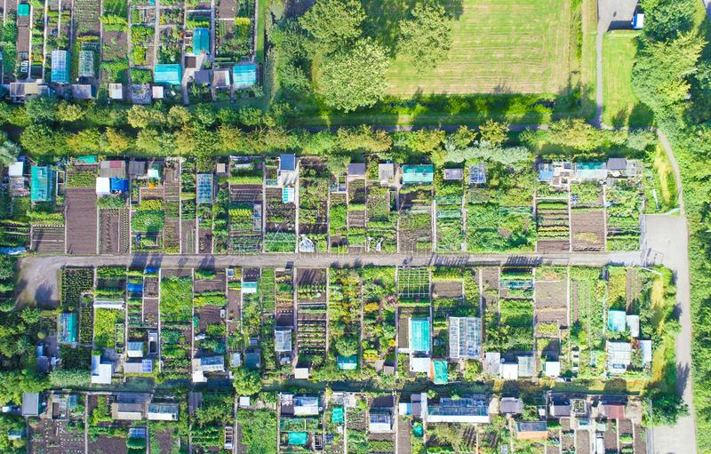 Powietrzna fotografia jarzynowi ogródy w Oudewater fotografia stock